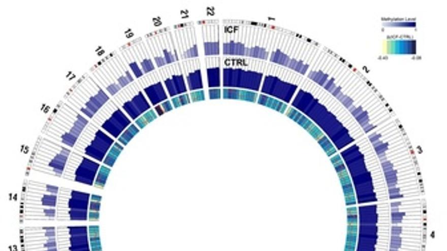 Representación De Los Dos Epigenomas Identificados Por El Idibell