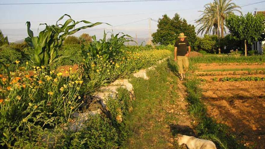 d612f29f70f09 Explotación agrícola ecológica en ...
