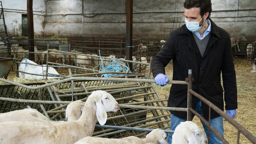 El líder del PP, Pablo Casado, el pasado lunes, durante la visita a una explotación ganadera.