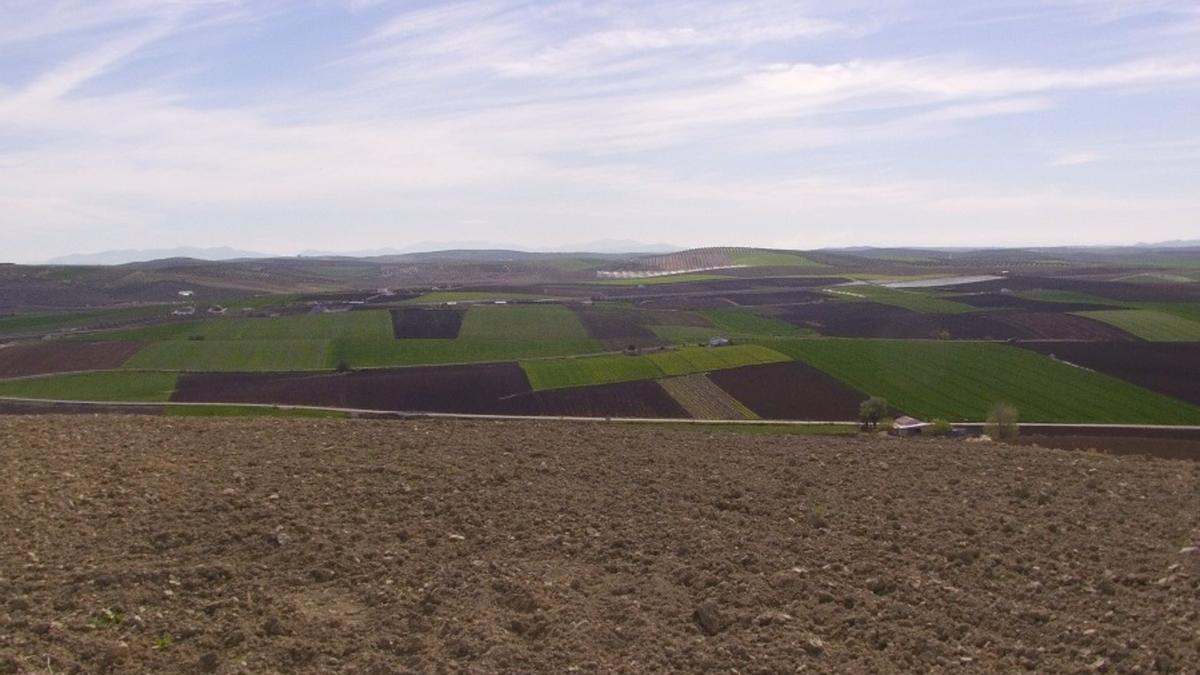 Imagen de la campiña cordobesa desde Cerro Mazarro, en el término municipal de Santaella.