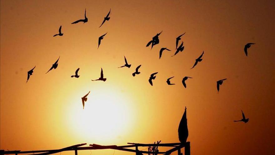 Madrid promociona el turismo ornitológico en la feria internacional de Cáceres