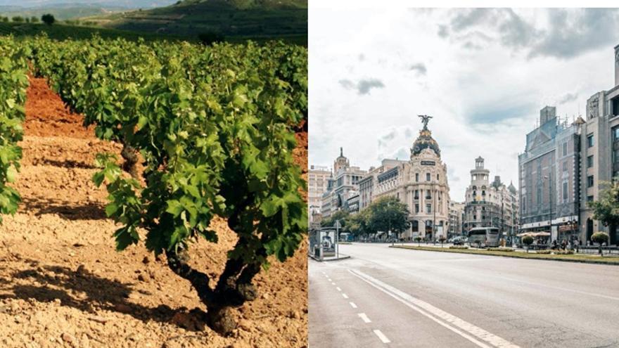 Sin playa pero con viñas: 8 vinos de Madrid que te van a llevar al cielo