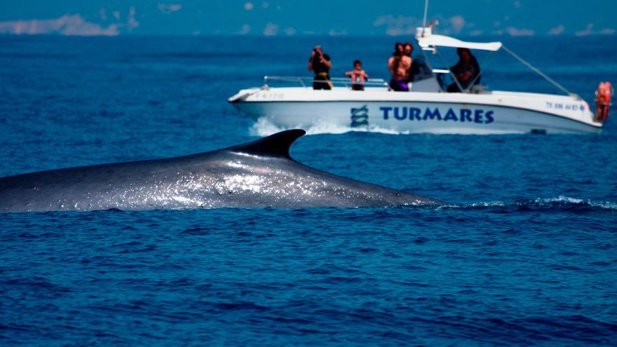 Avistamiento de cetáceos en el Estrecho de Gibraltar. / TURMARES