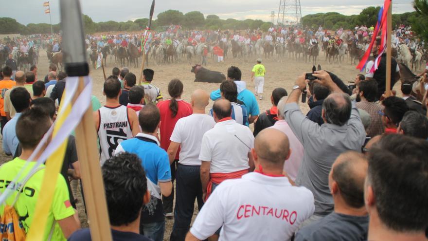El Toro de la Vega, en la que un morlaco es lanceado hasta la muerte, congrega a unas 35.000 personas./ William Criollo.