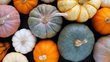 Calabaza, un alimento bueno, bonito y nutritivo