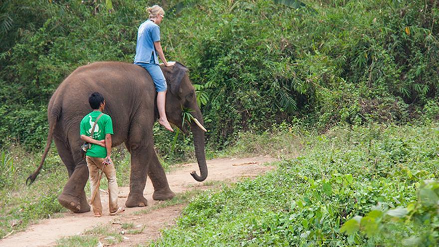 Turismo irresponsable con elefantes