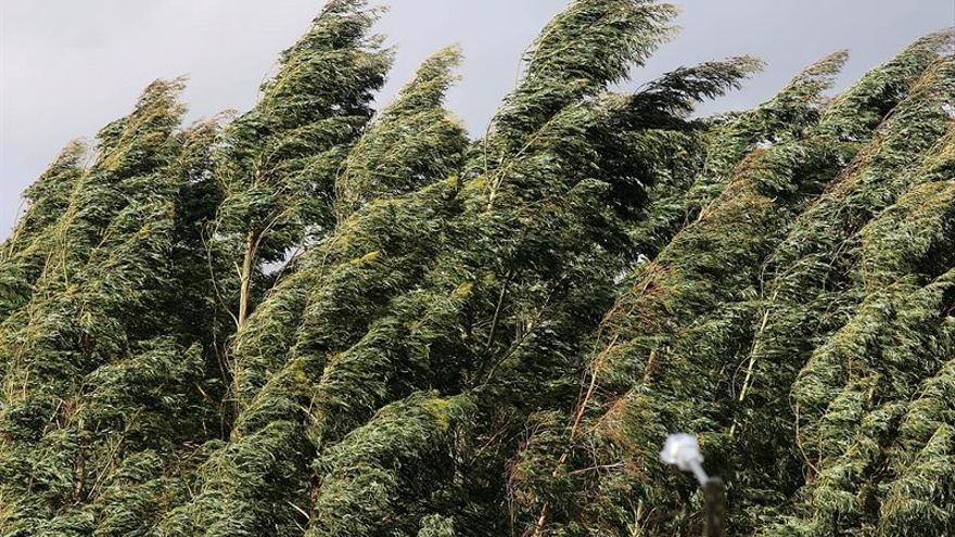El cambio climático amenaza con arrasar especies de eucalipto en Australia