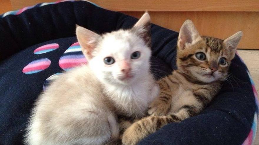 Carla y Vita iban en el coche al veterinario cuando sufrieron un accidente.