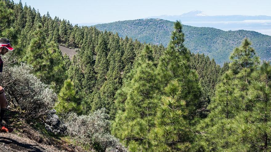 La Circular Extrema Villa de Moya es una de las pruebas de trail más consolidadas en el panorama insular.