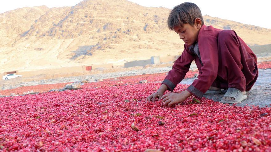 La covid aumenta el trabajo infantil y aleja la meta de erradicarlo en 2025
