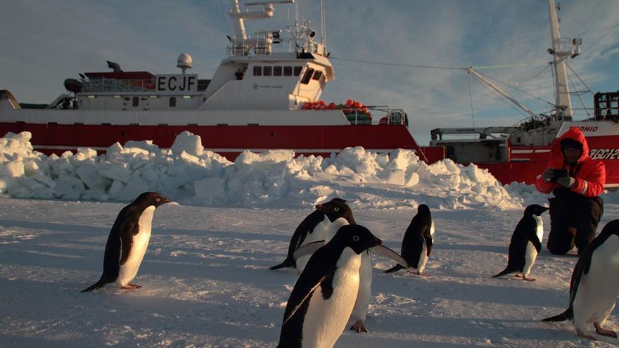Pingüinos junto al grupo de biólogos.