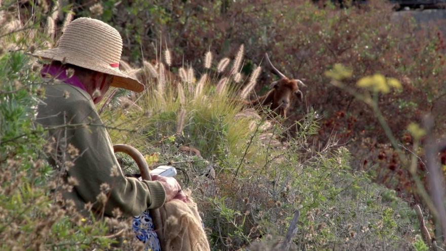 Fotograma del largometraje 'Cabreras. Mundos rurales habitados por mujeres' de la directora palmera Estrella Monterey.