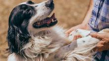 Mis animales sin mí: ¿qué será de ellos cuando yo no esté?