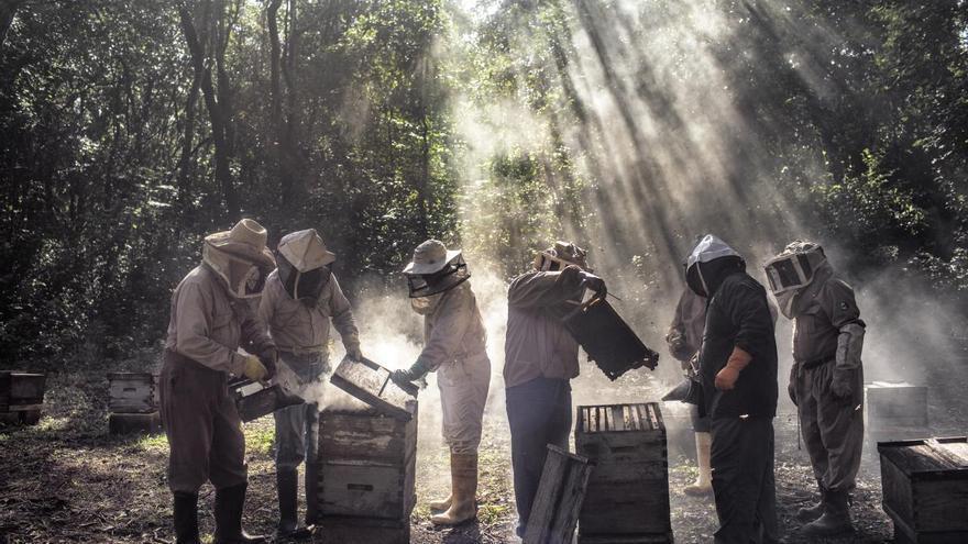 'God's Honey', serie ganadora del segundo premio en la categoría 'Medio ambiente'. Unos apicultores liderados por Russel Armin Balan cuidan sus colmenas en Tinúm, Yucatán (México)