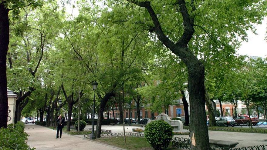 Una selección adecuada y la buena gestión de los árboles evitan su caída