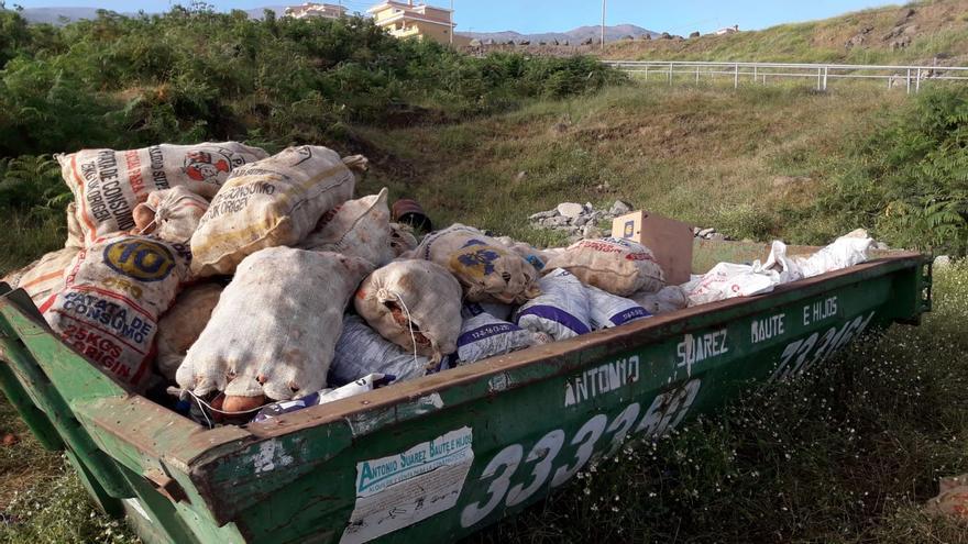Los agricultores de La Orotava han recogido 120.000 kilos de papas bichadas en apenas dos semanas