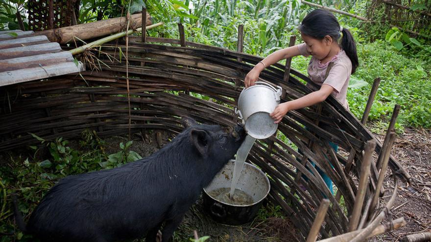 Sanju tiene nueve años y vive en un hostal de acogida, en Nepal, para poder continuar sus estudios. Su padre murió hace un año y su madre se esfuerza por mantener a la familia. Antes de vivir en el hostal, Sanju cuidaba de su hermano pequeño y se encargaba de las tareas de la casa, ahora sigue ayudando a su madre y alimentando a sus animales cuando vuelve a su hogar. (Kishor K. Sharma/ActionAid)
