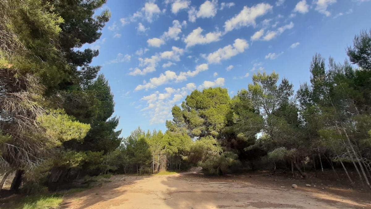 Paraje del espacio natural de Les Moles, en Paterna.