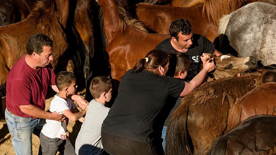 El 'curro' comienza con la retirada de los potros de la mano de los niños ayudados por sus familiares. Foto: El caballo de Nietzsche