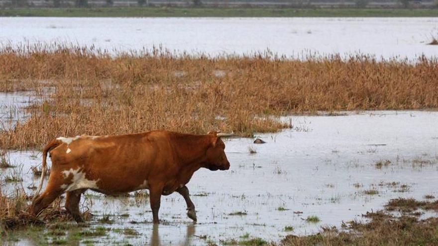 España redujo 27.246 toneladas su producción láctea a través de plan europeo