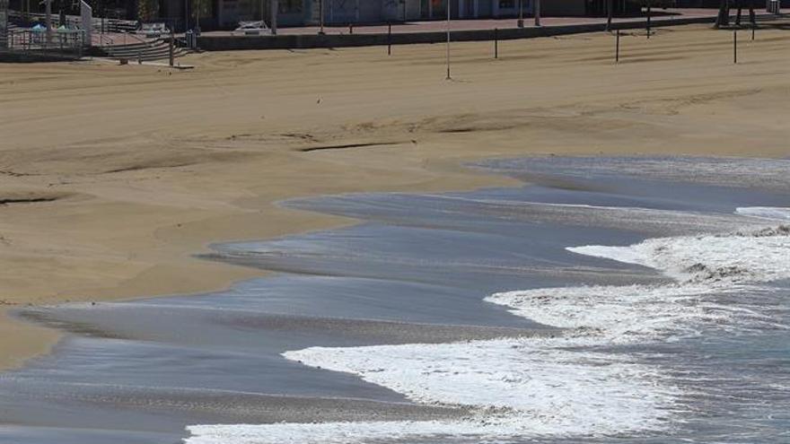 Algas en la orilla de la playa de Las Canteras.