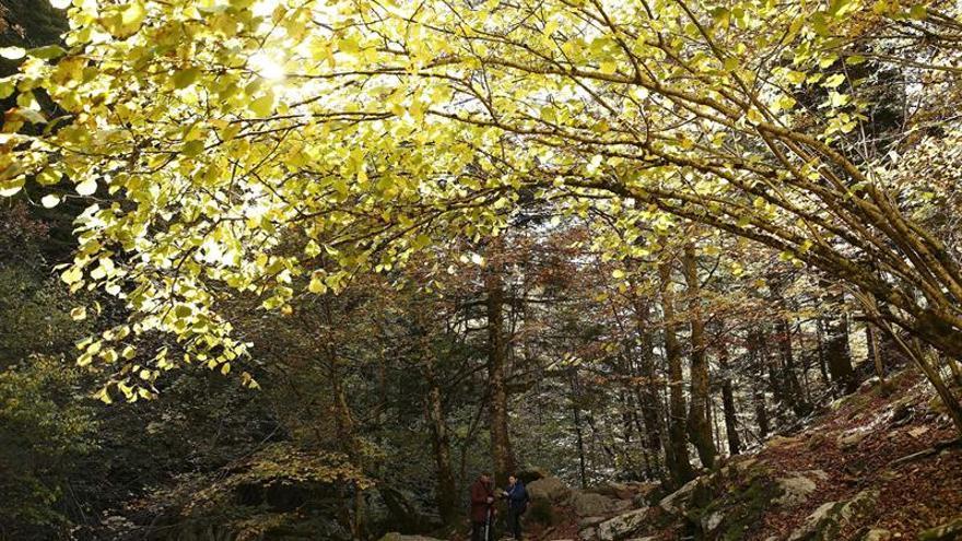 Navarra, Rioja y Castilla y León, CC.AA. con más certificaciones forestales