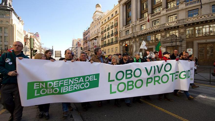 Primera manifestación en defensa del lobo ibérico, Madrid 2016.
