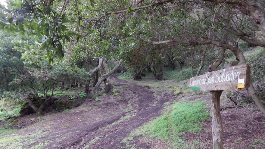 Camino San Salvador El Hierro