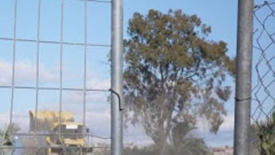 Eucalipto junto a la avenida Reino de Murcia / PSS