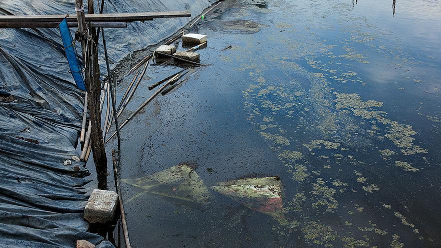 Aguas contaminadas en una granja en Surat Thani, Tailandia. La mayoría de los propietarios descargan las aguas en ríos cercanos sin someterlas a ningún tratamiento | Foto: Antolín Avezuela.