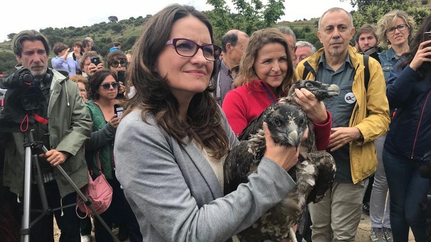 La vicepresidenta del Consell, Mónica Oltra (primer plano), y la consellera de Medio Ambiente, Elena Cebrián, con las crías de quebrantahuesos