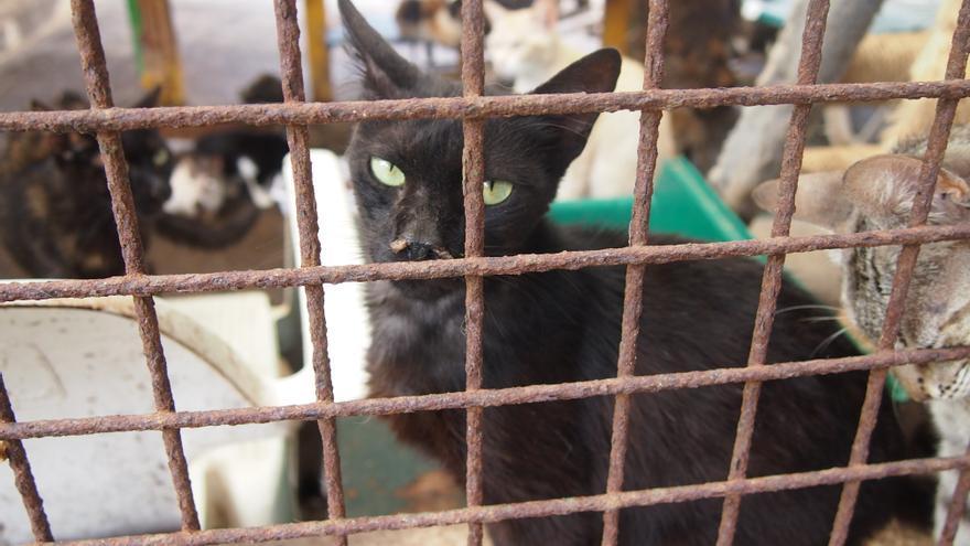 Los gatos son los grandes olvidados de los albergues de animales.