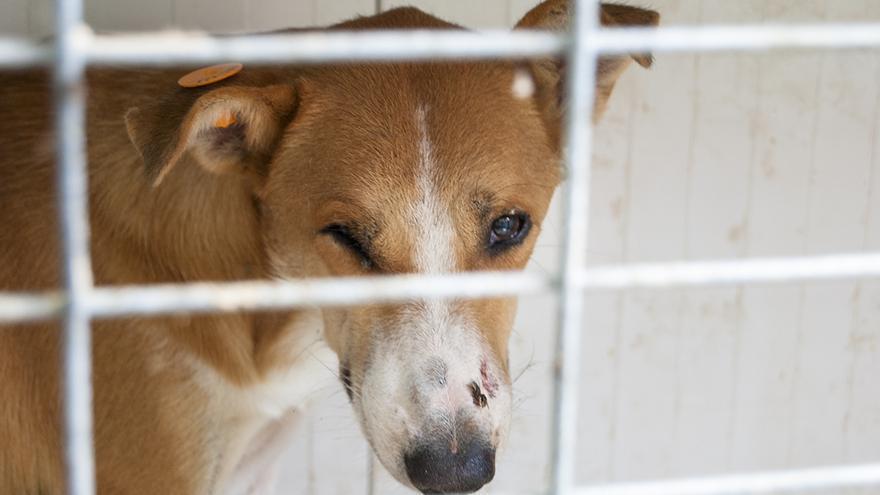 Perro callejero recogido, vacunado y esterilizado por PAL. Foto: Javier Martín
