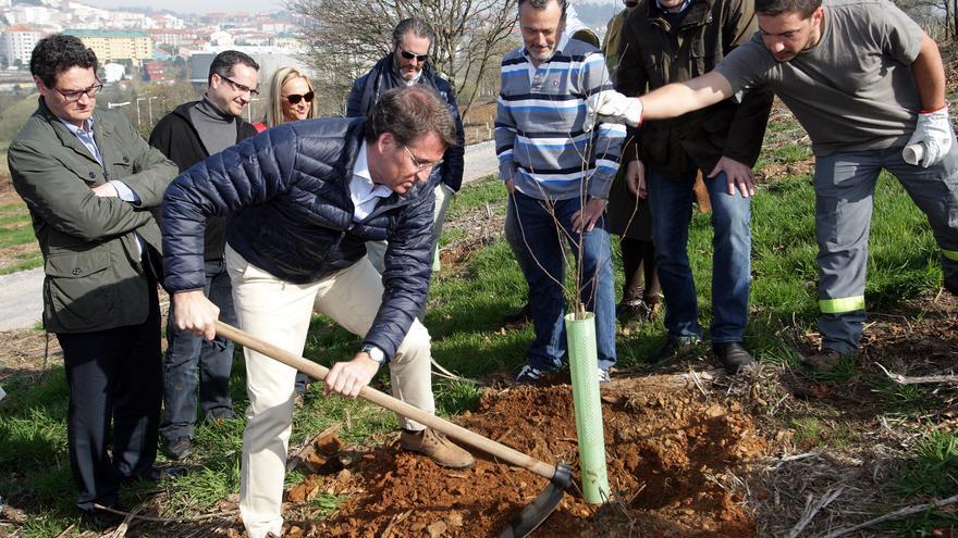 Feijóo, plantando un abedul en el 'Bosque de Galicia' en la precampaña del 24M