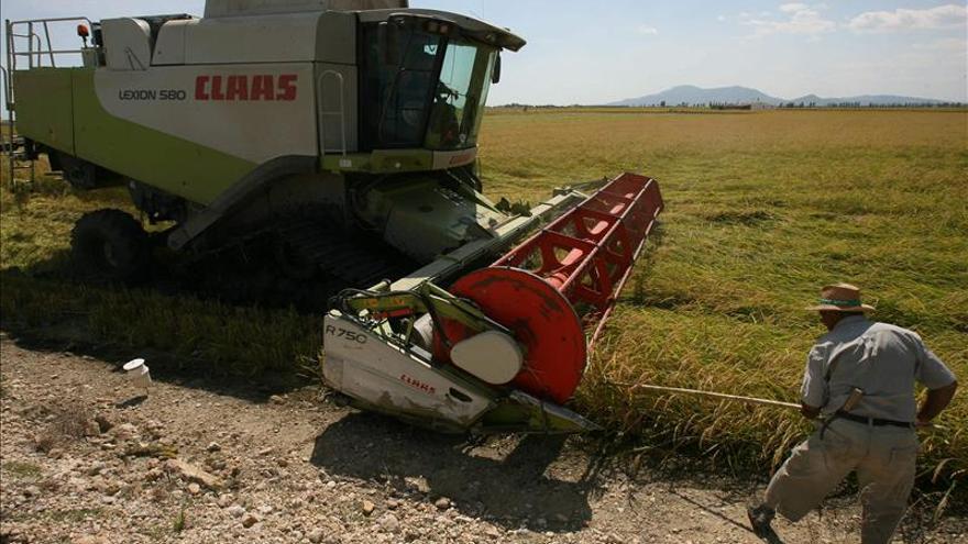 """La FAO prevé un """"fuerte"""" crecimiento de la producción de cereales en 2013"""