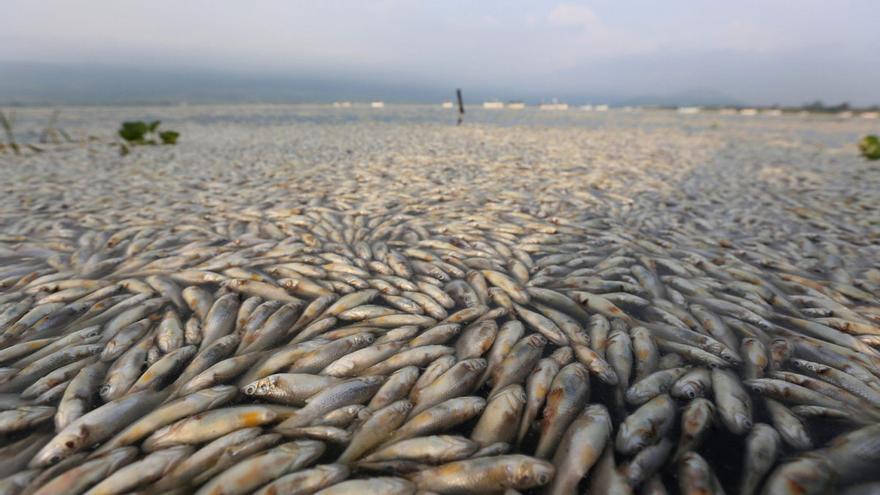Miles de peces muertos en la laguna de Cajititlán, Jalisco, México. EFE.