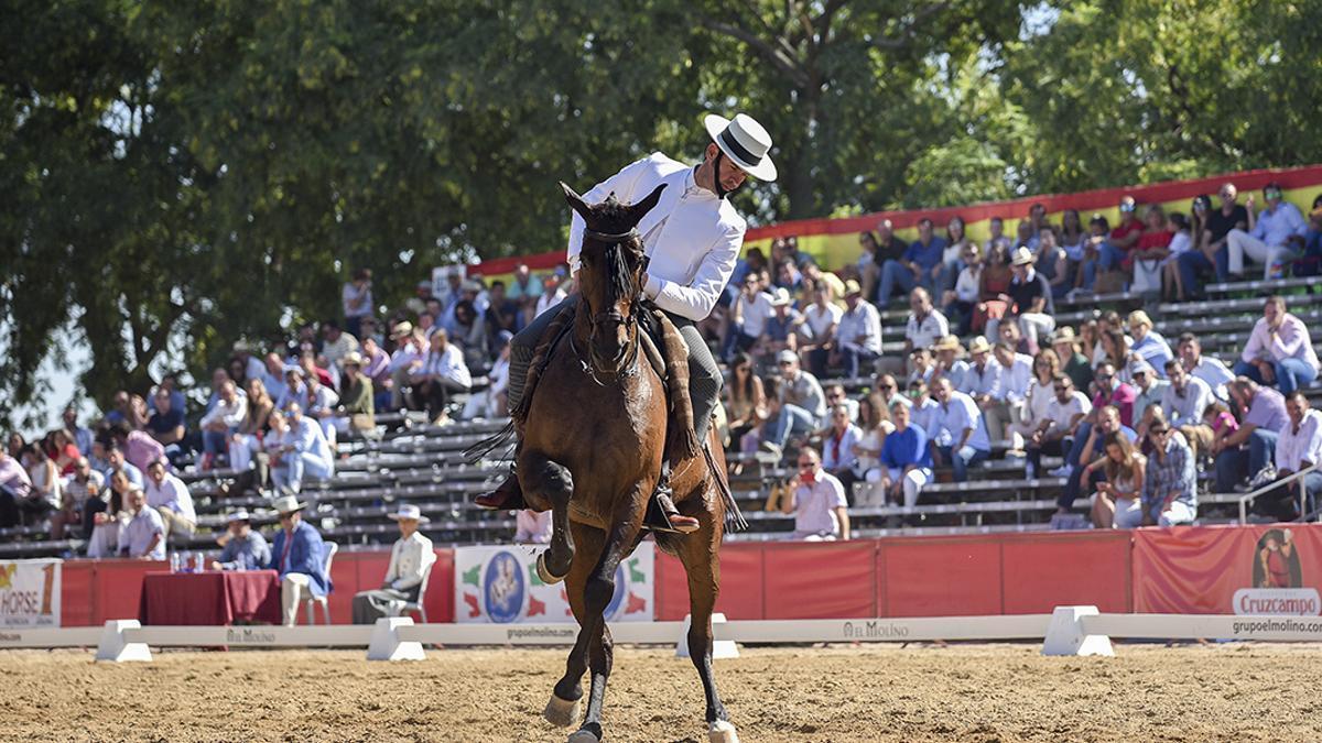 Imagen de un campeonato de Doma Vaquera en Córdoba.