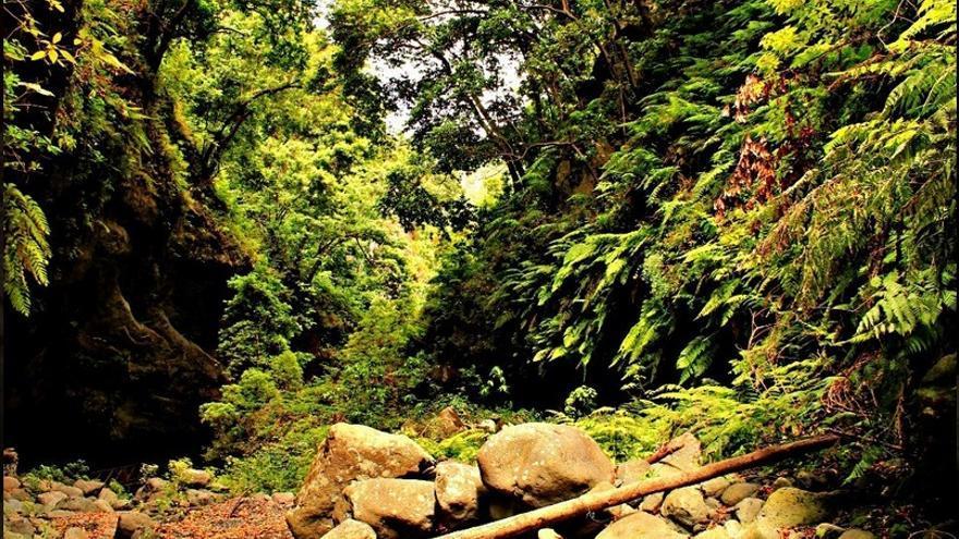 En la imagen, Bosque de Los Tilos. Foto: palmerosenelmundo.com