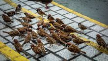 Una petición a miles de ayuntamientos para que respeten la biodiversidad urbana tras el confinamiento