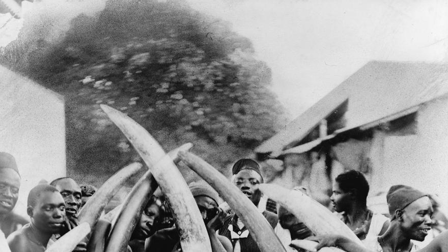 Africanos colmillos elefantes