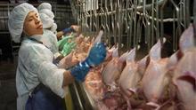 Empaquetar 60 trozos de pollo por minuto: lo inhumano de las procesadoras avícolas en EEUU