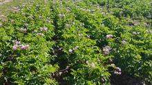 Cultivos hortícolas ecológicos