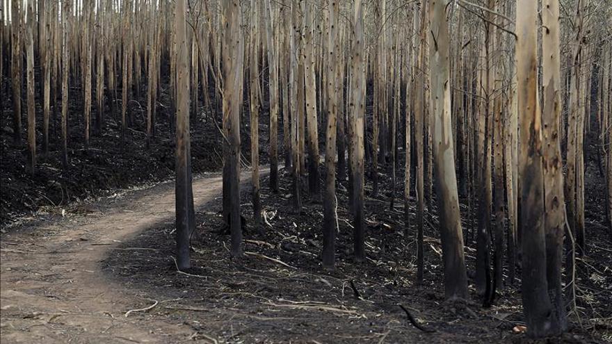 Cantabria reclamará al Estado casi 92 millones por los incendios de diciembre