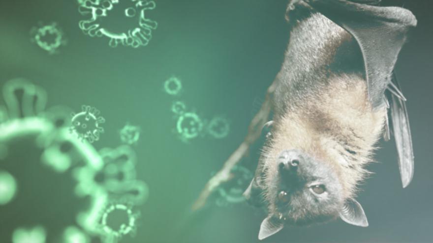 El consenso científico es que el nuevo coronavirus, detectado por primera vez en China a finales de 2019, originó en los murciélagos.