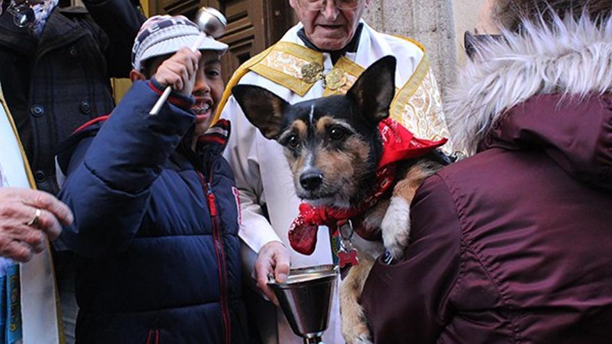 Bendición de animales en la iglesia de San Antón | SOMOS CHUECA