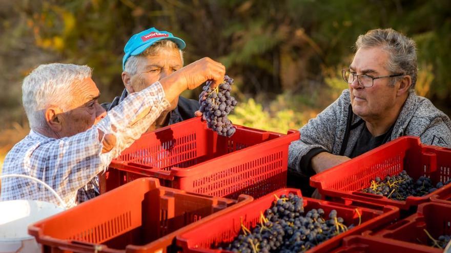 Viticultores de La Palma.