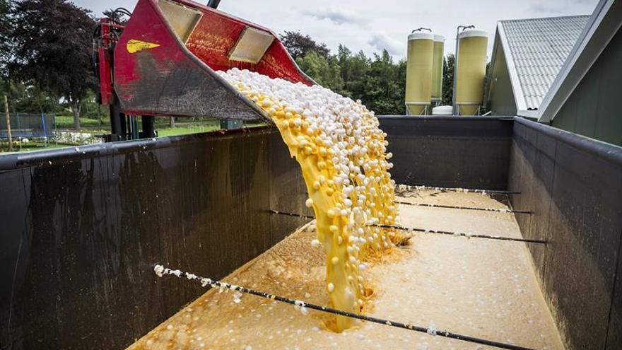 Una autoridad belga tardó más de mes y medio en avisar a la UE sobre los huevos contaminados