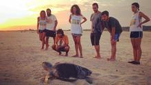 En México, Kowabunga Ecoproject trabaja con voluntarios para la conservación de tortugas marinas.