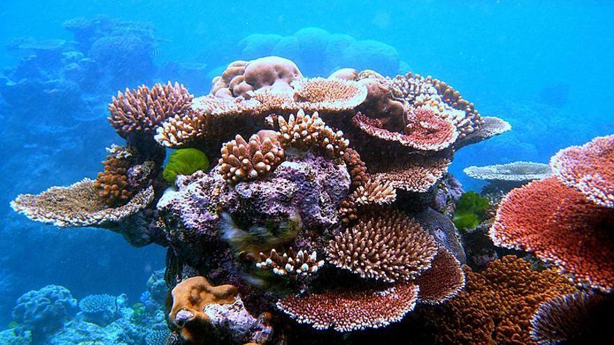 Arrecifes de coral en Australia
