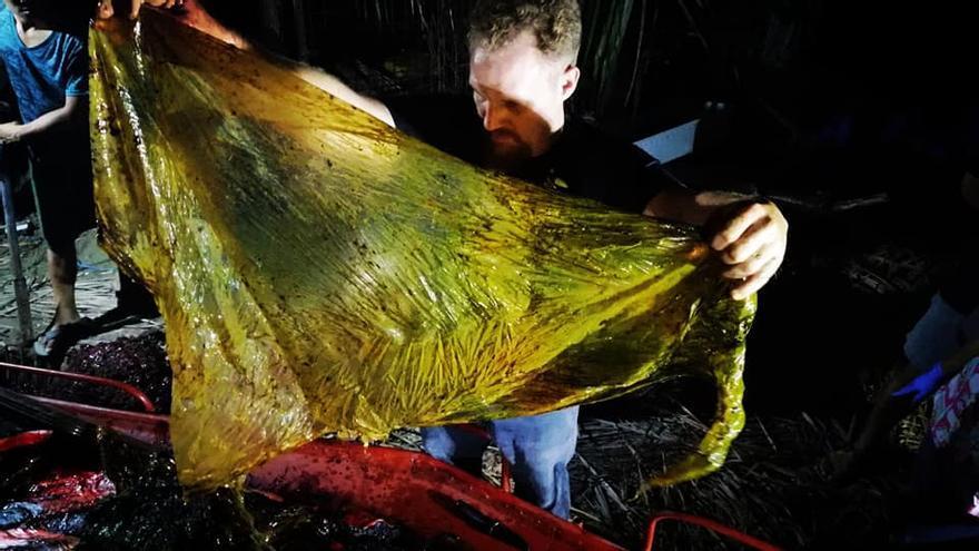 Darrell Blatchley extrae los plásticos del estómago de la ballena fallecida.